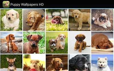 Puppy-Wallpapers-HD
