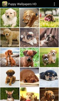 Puppy-Wallpapers-HD1