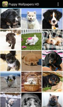 Puppy-Wallpapers-HD2