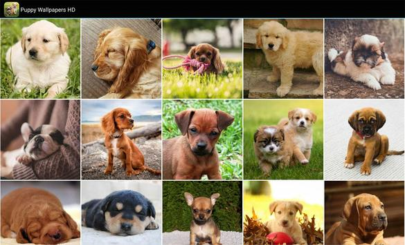 Puppy-Wallpapers-HD4