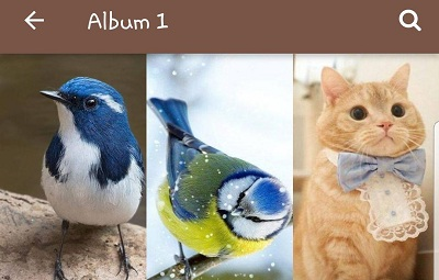 Animal-and-Birds-Wallpapers