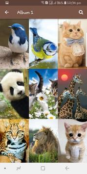 Animal-and-Birds-Wallpapers5